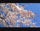 【春ニカ祭2015】春と風_1.2【NNIオリジナル曲】
