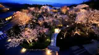 春の京都(2015/4/4)