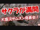 【サムスン発表会】 サクラが満開!
