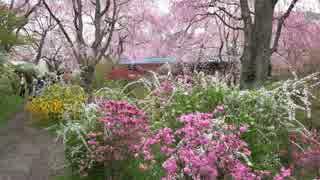 春の京都(2015/4/9)
