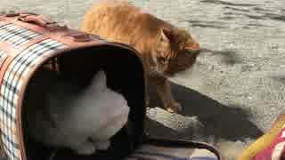 【宇宙猫VS頭が子猫】保護猫、お花見に出