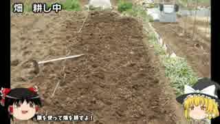 ちょっと大きな家庭菜園はじめてみる 【一