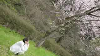 【桜の中で】アイロニ 踊ってみた【らいき】 thumbnail