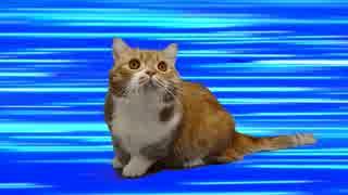 【猫アニソン】ジョジョの BLOODY STREAM