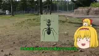 【ゆっくり解説】アリスさんのアリの生態