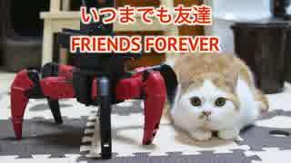 【マンチカンズ】猫とロボットの友情
