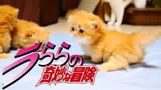 【猫アニソン】ジョジョのSTAND PROUD替え歌【マンチカンズ】