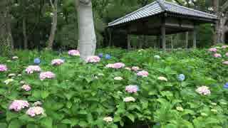 初夏の京都(2015/6/6)