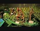 【国内観光・旅行】大アマゾン展へ行って来た【国立科学博物館】