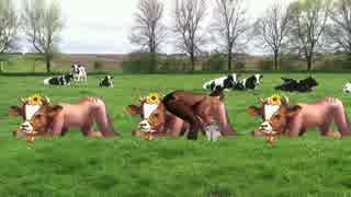 乳搾り先輩.cowcow