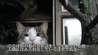 【公園猫戦争】モフり際の闘い!新登場猫のモフりに挑む