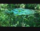 【癒し系】 神の子池③ 【自然音】