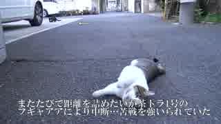 【公園猫戦争】モフり際の攻防…まさかの救世主登場