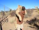 甘えるライオン