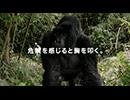 オービィ横浜 これが本当の動物だ ゴリラ パー 篇