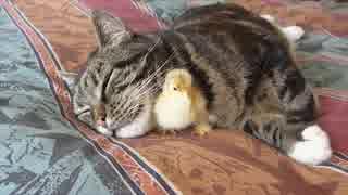 猫とウズラ