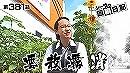シーサ。の回胴日記_第381話[by ARROWS-SCREEN]
