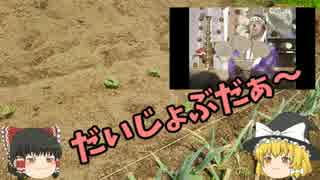 ゆっくり霊夢とゆっくり魔理沙の 家庭菜園