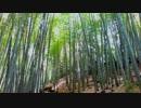 【癒し系BGM】 竹林② 【自然音】