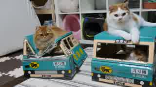 【マンチカンズ】猫の宅急便(クロネコヤマトの段ボール)