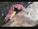 【日本にも上陸!?】韓国で大量発生中のヒモムシの捕食がきもい!