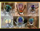 求愛行動が面白い!ピーコックスパイダーの求愛ダンス - Peacock Spider