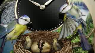 小鳥の腕時計