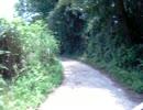 ヤマハ セロー250 山道を走る!!振動おおいな。
