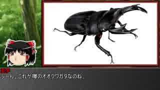 ゆっくり霊夢とやる夫が学ぶ 昆虫大百科 p