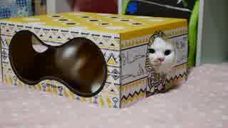 【マンチカンズ】猫もぐらたたきBOX