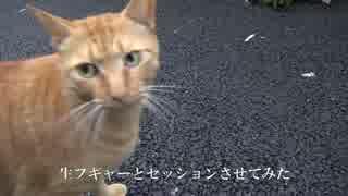 フギャーと鳴く猫に録音してフギャーを聞かせてみフギャァァァ
