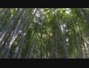 【癒し系BGM】 竹林② 風音 虫の声 【自然音】 Bamboo forest