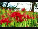 【東方】花は幻想のままにをハウスアレンジしてみた