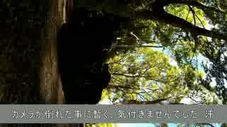 バイクdeえんじょいヽ(・∀・)ノ 【きゃん