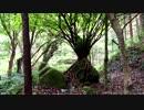 【癒し系BGM】 岩乗りの木とせせらぎと鳥の声② 【自然音】