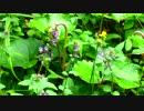 【癒し系BGM】 野草とせせらぎ① 【自然音】