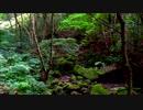 【癒し系BGM】 森と野鳥とせせらぎ③ 【自然音】