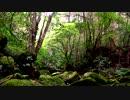 【癒し系BGM】 渓流 鳥の声① 【自然音】