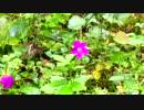 【癒し系BGM】 渓流 せせらぎと野の花 【自然音】