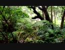 【癒し系BGM】 渓流 鳥の声② 【自然音】