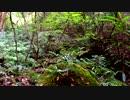 【癒し系BGM】 森と鳥の声① 【自然音】