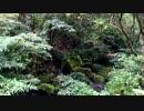 【癒し系BGM】 清流 せせらぎ 鳥の声③ 【自然音】