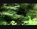 【癒し系BGM】 清流 せせらぎ 鳥の声④ 【自然音】