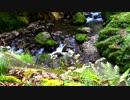 【自然音】 加江田渓谷③ 野の花と清流 【癒し系BGM】