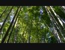 【自然音】竹林と鳥のさえずり①【癒し系BGM】