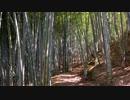 【自然音】竹林と鳥のさえずり②【癒し系BGM】