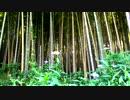 【自然音】竹林と鳥のさえずり④【癒し系BGM】