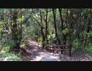 【自然音】 森の声② 鳥の声 【癒し系BGM】