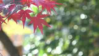 秋の京都(2015/11/1)