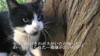 コワモテのボス猫、童心に帰ってはしゃぐ